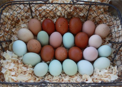 Eggs Over Easy, Hold the GMOs